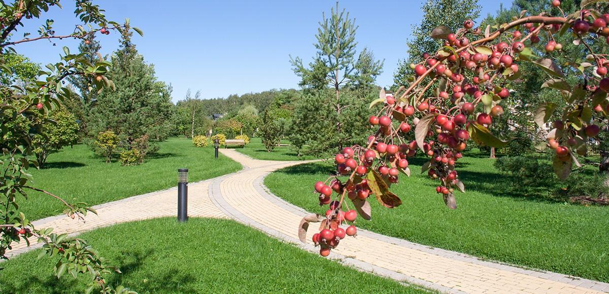 Парк в центральной части поселка Мэдисон Парк