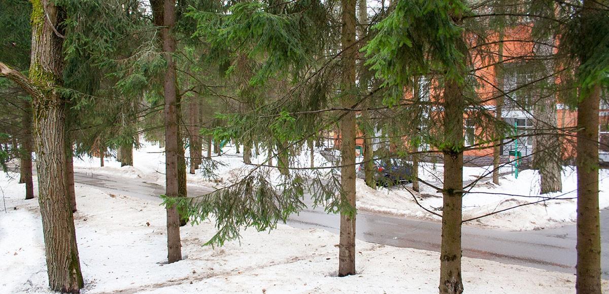 Вид из окна главной спальни, квартира 7, Усово